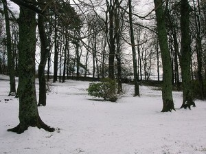 Ayrshire woodland in the snow
